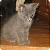 Adopt A Pet :: Curtis - Acme, PA