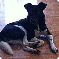 Adopt A Pet :: Lexie - Hamilton, ON