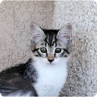 Adopt A Pet :: Cricket - Palmdale, CA