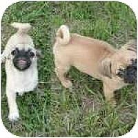 Adopt A Pet :: Mini Me and Chunky Monkey - Windermere, FL