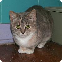 Adopt A Pet :: Polly - Dover, OH