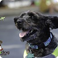 Adopt A Pet :: Cameo - Alpharetta, GA