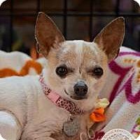 Adopt A Pet :: Rosie - Salt Lake City, UT