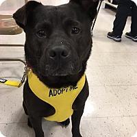 Adopt A Pet :: Vera Wang - Boynton Beach, FL