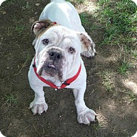 Adopt A Pet :: Bernice - Santa Ana, CA
