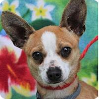 Adopt A Pet :: GALLAGHER - Red Bluff, CA