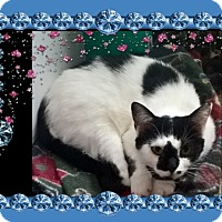 Adopt A Pet :: Puddy - london, ON
