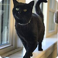Adopt A Pet :: Patty - Overland Park, KS
