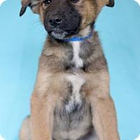 Adopt A Pet :: Albacore - Waldorf, MD