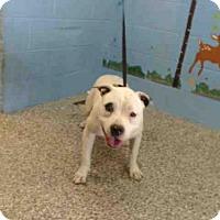 Adopt A Pet :: A503153 - San Bernardino, CA