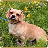 Adopt A Pet :: Minus - DeForest, WI