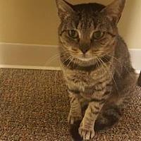 Adopt A Pet :: Nemia - Columbia, SC