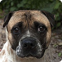 Adopt A Pet :: Polly - Antioch, IL