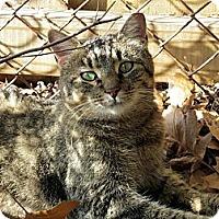 Adopt A Pet :: Chica - Alexandria, VA
