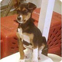 Adopt A Pet :: Female Puppy - Irvington, KY