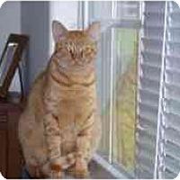 Adopt A Pet :: Agent - Wakinsville, GA