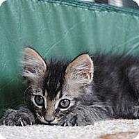 Adopt A Pet :: Fluffers - Palmdale, CA