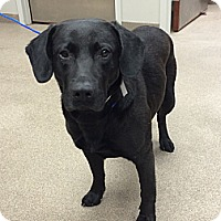 Adopt A Pet :: Lobo - Cumming, GA