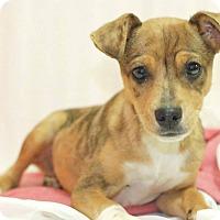 Adopt A Pet :: Colby - Homewood, AL