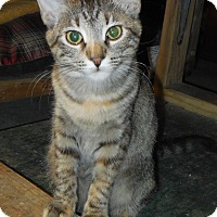 Adopt A Pet :: JuJu Bead - Whiting, IN