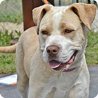 Adopt A Pet :: Daisey - Meridian, ID