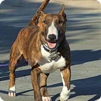 Adopt A Pet :: Tokyo - Yoder, CO