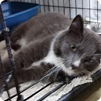 Adopt A Pet :: Timber - Jackson, MO