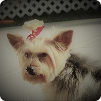 Adopt A Pet :: Shirley - Weeki Wachee, FL