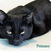 Adopt A Pet :: Leia - Sherman Oaks, CA