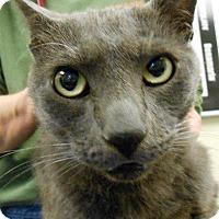 Adopt A Pet :: Harvey - Lancaster, PA