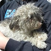Adopt A Pet :: Casper - Antioch, IL
