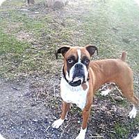 Adopt A Pet :: Brock(RIP ) - Northumberland, ON