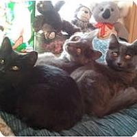 Adopt A Pet :: Jonas - Anchorage, AK