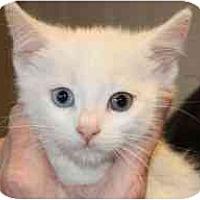 Adopt A Pet :: Jack Frost - Markham, ON
