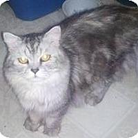 Adopt A Pet :: Avery - Dallas, TX