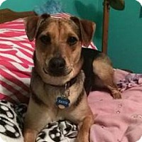 Adopt A Pet :: Katie ~ Adoption Pending - Youngstown, OH