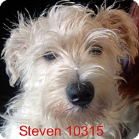 Adopt A Pet :: Steven - Greencastle, NC