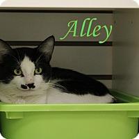 Adopt A Pet :: Alley - Winter Haven, FL
