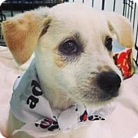 Adopt A Pet :: *Kaya - Erwin, TN