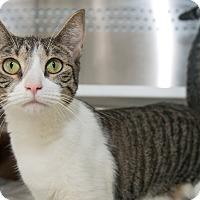 Adopt A Pet :: Nelly - New York, NY