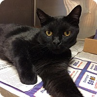 Adopt A Pet :: Deuce - East Brunswick, NJ