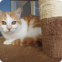Adopt A Pet :: Alexander - Northfield, MN