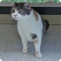 Adopt A Pet :: Callie - Chambersburg, PA