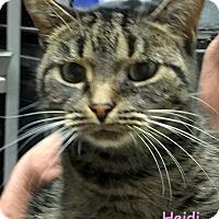 Adopt A Pet :: HEIDI - Cliffside Park, NJ