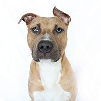 Adopt A Pet :: Chance - Fort Worth, TX