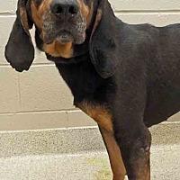Adopt A Pet :: Meryl - Shorewood, IL