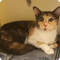 Adopt A Pet :: Tennyson - Salisbury, MA