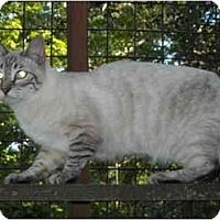 Adopt A Pet :: Pearl - Riverside, RI