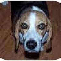 Adopt A Pet :: Hunter Ares - Phoenix, AZ