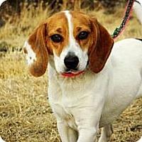 Adopt A Pet :: Alli - Cheyenne, WY
